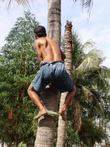 Trèo hái dừa dùng nài