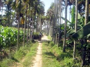 Đường làng Trà Nhiêu