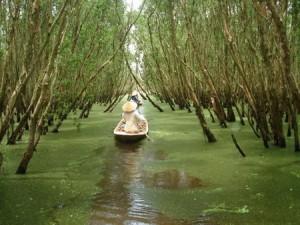 Rừng tràm ở Long An