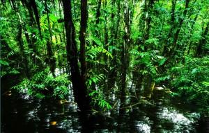 Rừng U Minh
