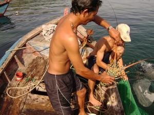 Đánh bắt tôm hùm trên đảo Bình Ba
