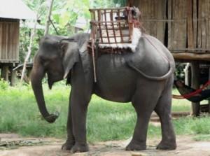 Bành voi