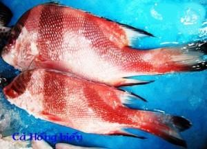 Cá hồng biển