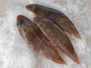Cá lưỡi trâu