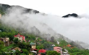 Tam Đảo trong sương