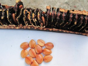 Quả và hạt ô môi