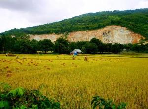 Một cánh đồng ở Tri Tôn
