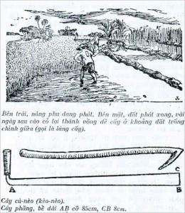 Phát cỏ trồng lúa ở miền Tây Nam Bộ xưa