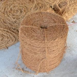 Dây dừa